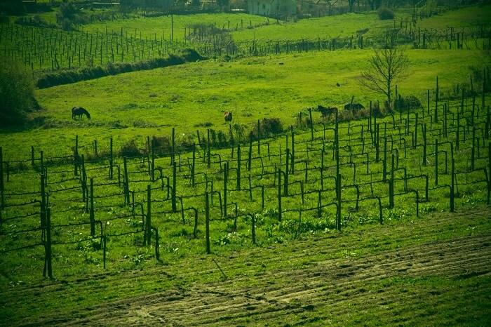 Foto 1 Vinhas 2 O Sector dos Vinhos em Portugal  O Sector dos Vinhos em Portugal  Foto 1 Vinhas 2