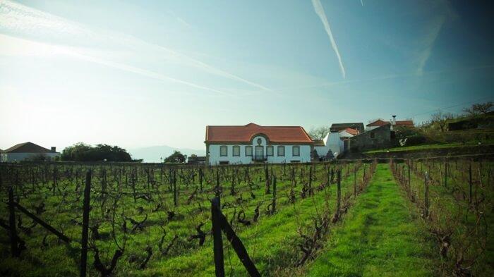 Foto 10 Vinhas O Sector dos Vinhos em Portugal  O Sector dos Vinhos em Portugal  Foto 10 Vinhas