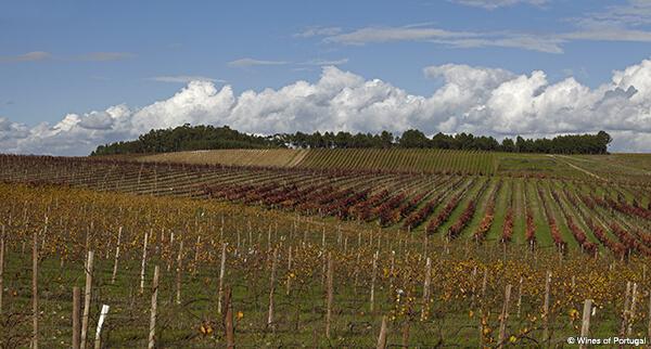 Foto 11 Bairrada Wines of Portugal O Sector dos Vinhos em Portugal  O Sector dos Vinhos em Portugal  Foto 11 Bairrada Wines of Portugal
