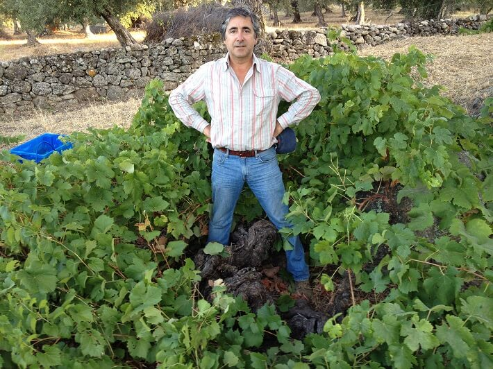 the-wines-of-joao afonso