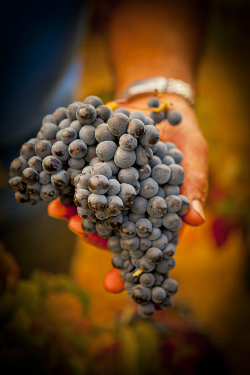 Blend_All_About_Wine_Casca_Wines_Hélder_Cunha_Grapes