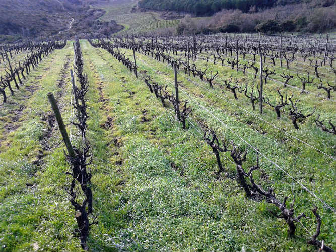 Blend_All_About_Wine_Quinta_da_Murta_Vinhas Quinta da Murta = Arinto Quinta da Murta = Arinto Blend All About Wine Quinta da Murta Vinhas
