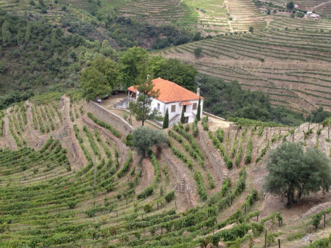 Blend_All_About_Wine_Quinta_do_Fojo_Quinta