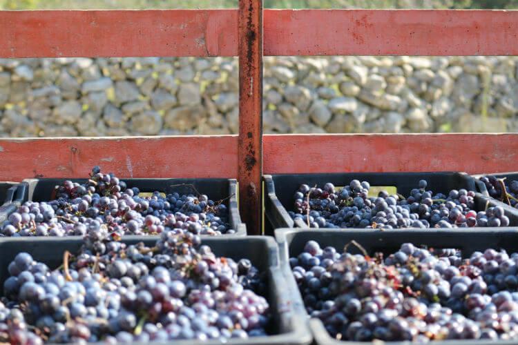 Blend_All_About_Wine_Grape_Transport «Vinhos de Quinta» «Vinhos de Quinta» Blend All About Wine Grape Transport
