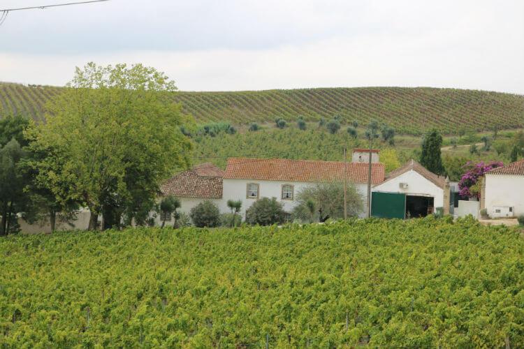 Blend_All_About_Wine_Grapes_Wine_Estate «Vinhos de Quinta» «Vinhos de Quinta» Blend All About Wine Grapes Wine Estate