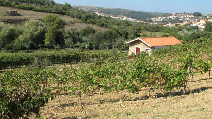Blend_All_About_Wine_Manz_Wine_Rocky_Vineyard_Overlooking_Cheleiros