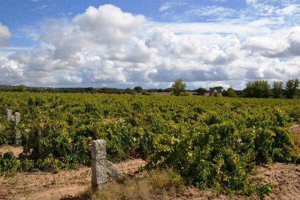 Blend_All_About_Wine_The_Amphoras_of_Mr_Joseph_VinhaVelhaHerdadeMontedaRibeira
