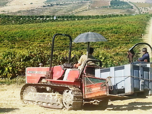 Prepared for rain or shine harvesting a Sairrao