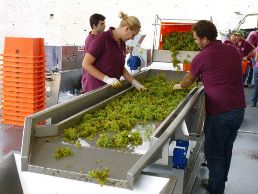 Blend_All_About_Wine_Madeira_Vintners_Sorting_Table Yes we can: Madeira Vintners – A new approach to Madeira Yes we can: Madeira Vintners – A new approach to Madeira Blend All About Wine Madeira Vintners Sorting Table