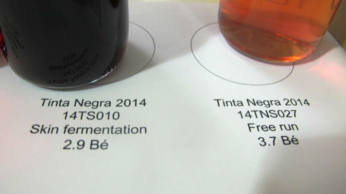 Blend_All_About_Wine_Madeira_Vintners_Tinta Negra_fermented_on_skins_versus_free_run_juice