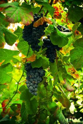 blend_all_about_wine_vinho_verde_tinto_1