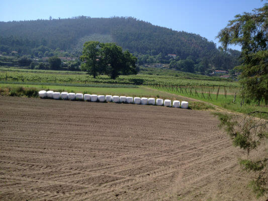 Blend-All-About-Wine-Old-Wines-From-Casa-de-Paços-the-new-vines-still-being-planted