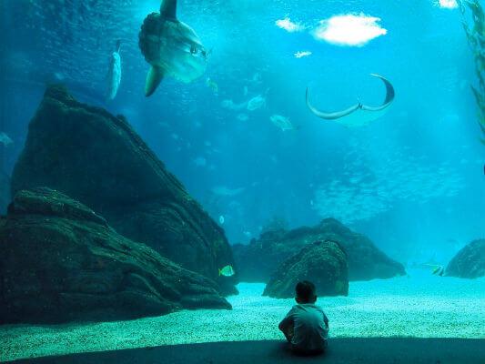 Blend-All-About-Wine-Midsummer-in-Portugal-Lisbon-Oceanarium