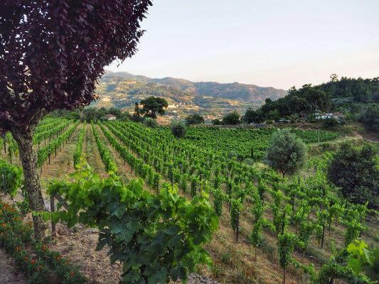 Blend-All-About-Wine-Midsummer-in-Portugal-Quinta-de-Covela