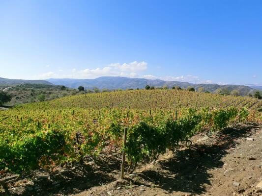 Blend-All-About-Wine-Quinta-de-Touriga-The-vineyard quinta da touriga-chã Quinta da Touriga-Chã, a plenitude do Douro Superior... Blend All About Wine Quinta de Touriga The vineyard