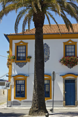 Blend-All-About-Wine-Aveiro-Palm-Trees