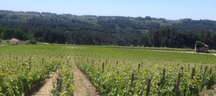 Blend-All-About-Wine-Quinta de Lemos-2 quinta de lemos Quinta de Lemos, um Projecto de Vida... Blend All About Wine Quinta de Lemos 2