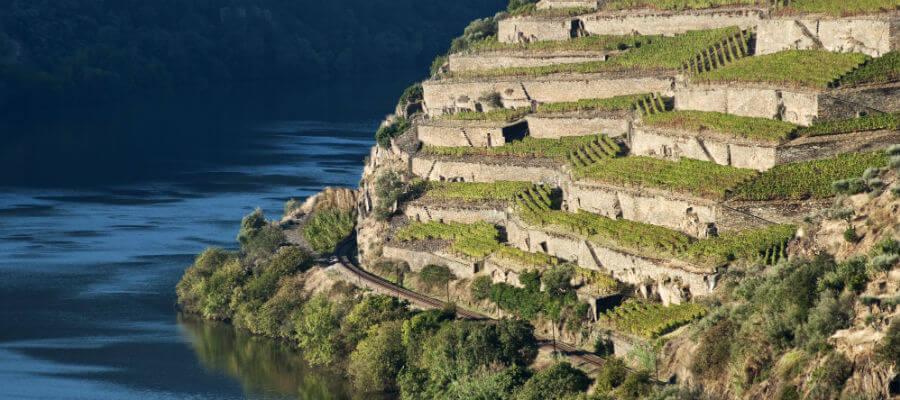 Blend-All-About-Wine-Quinta-de-la-Rosa-The-Vines