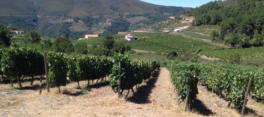 Blend-All-About-Wine-Quinta do Cume-White-Grapes