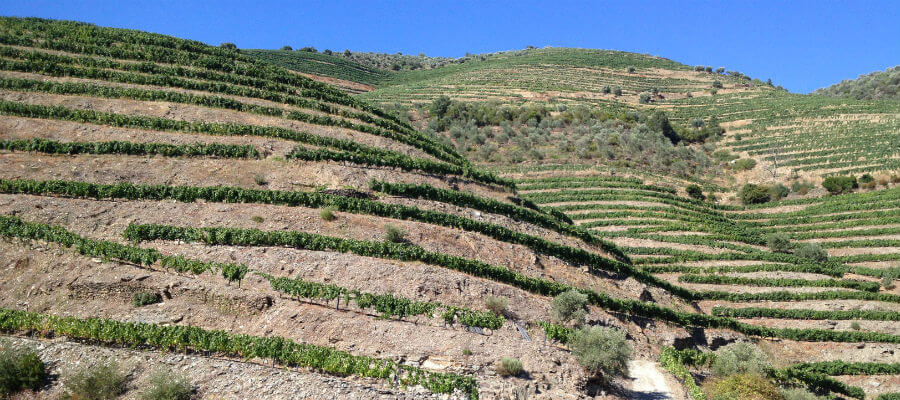 Blend-All-About-Wine-Quinta do Cume_Vines