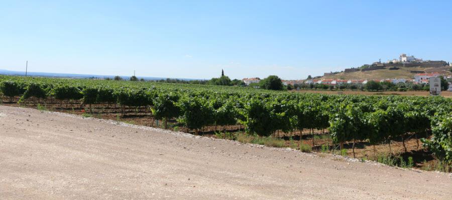 Blend-All-About-Wine-Tiago Cabaço-Vines