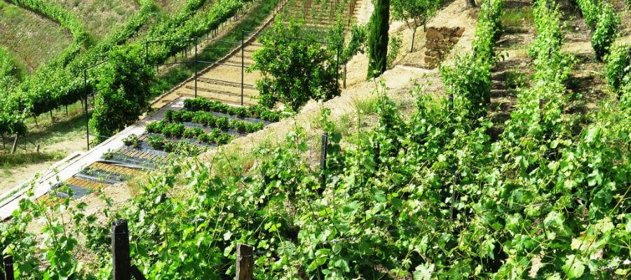 Blend-All-About-Wine-Foz Torto-vegetable-garden