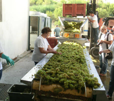 Blend-All-About-Wine-Quinta de Cidrô-Sourcing-grapes Grape-Harvesting A grape-harvesting weekend in Douro... Blend All About Wine Quinta de Cidr   Sourcing grapes