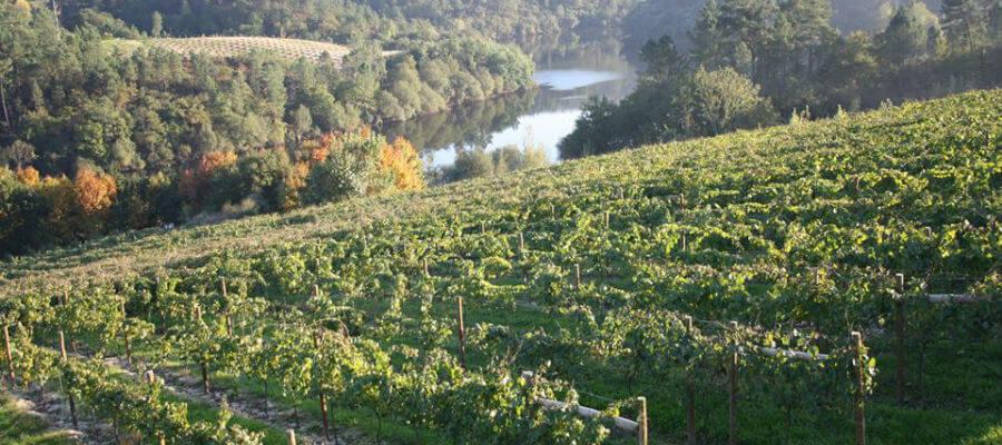 Blend-All-About-Wine-Quintas de Caiz-Vineyard
