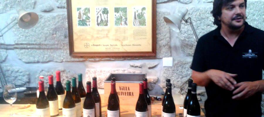 Blend-All-About-Wine-Casa da Passarella-Harvesting-day-Paulo-Nunes