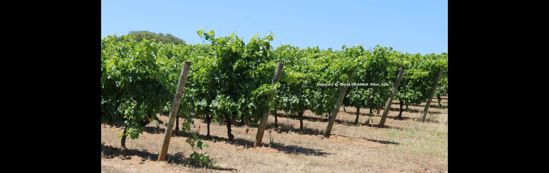 Blend-All-About-Wine-Goya-Slider