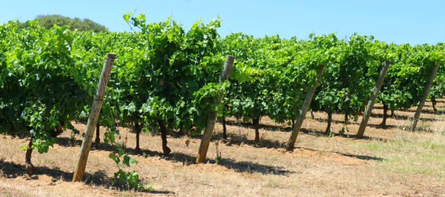 Blend-All-About-Wine-Goya-Terroir-Vineyard