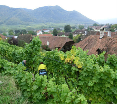 Blend-All-About-Wine-Port wine-Vienna-Wachau