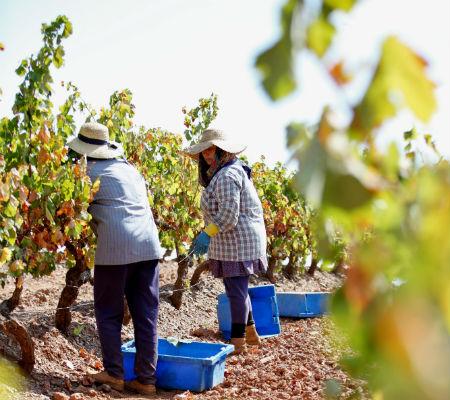 Blend-All-About-Wine-Herdade das Servas-2013 wines-harvest