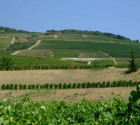 Blend-AllAbout-Wine-Real Comapanhia Velha-Douro to Tejo-Tokaj