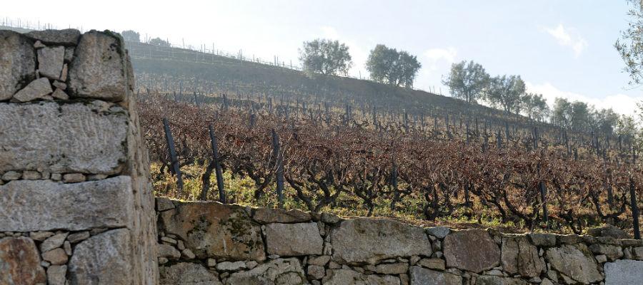 Blend-All-About-Wine-Caves da Murganheira-Vineyard