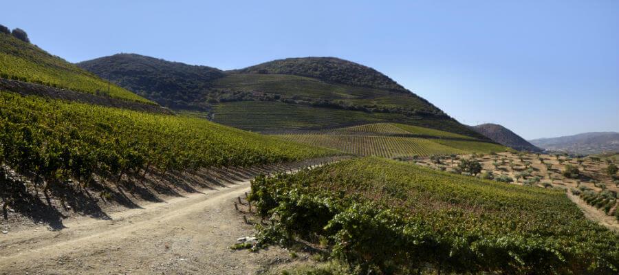 Blend-All-About-Wine-Passagem wines-Quinta das Bandeiras-2 vinhos passagem Vinhos Passagem – para lá do rio Blend All About Wine Passagem Quinta das Bandeiras 2