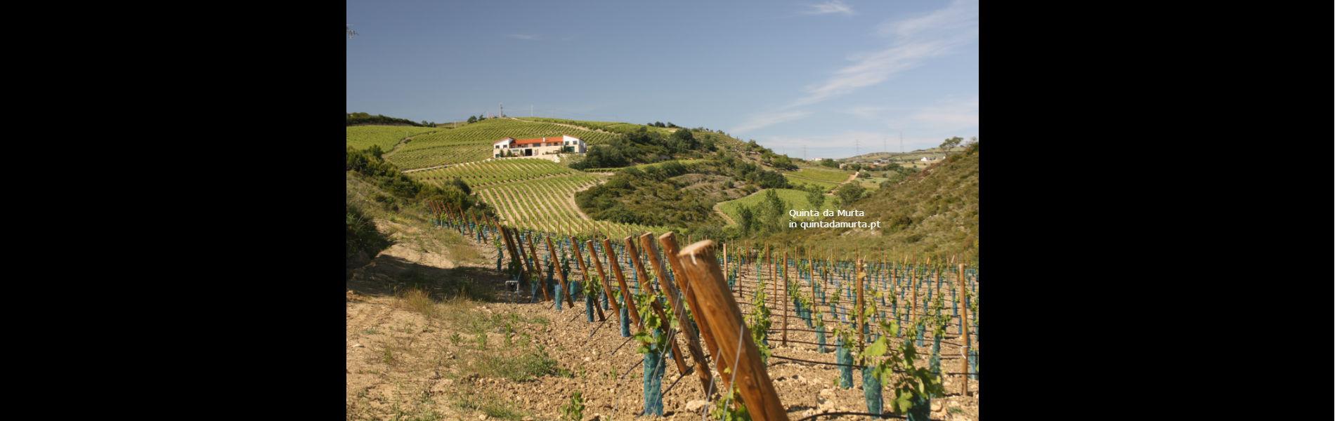 Blend-All-About-Wine-Quinta da Murta-Slider