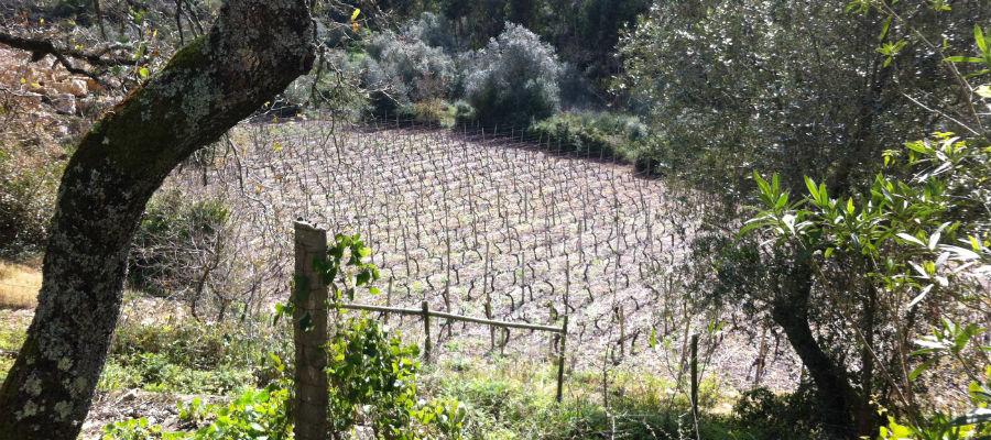 Blend-All-About-Wine-Escondido 2012-A Lisbon Gentleman-Vineyard 2