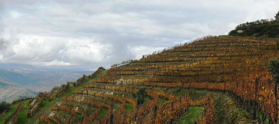 Blend-All-About-Wine-Lua Cheia-Quinta do Bronze lua cheia em vinhas velhas Lua Cheia em Vinhas Velhas in the Douro Blend All About Wine Lua Cheia Quinta do Bronze