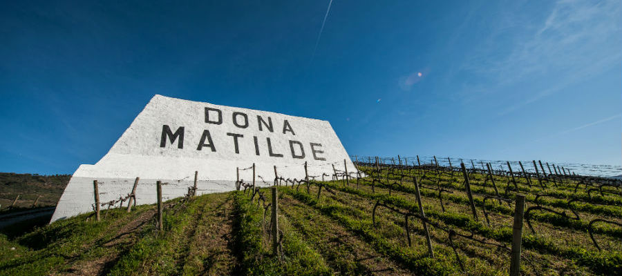 Blend-All-About-Wine-Quinta Dona Matilde-presentation-Quinta quinta dona matilde The presentation of an old producer - Quinta Dona Matilde Blend All About Wine Quinta Dona Matilde presentation Quinta
