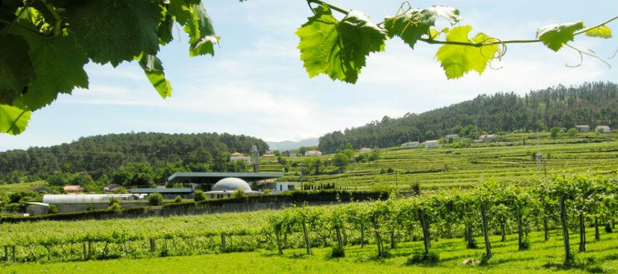 Blend-All-About-Wine-Quintas de Melgaço-Quinta quintas de melgaço Quintas de Melgaço - QM Homenagem Reserva 2014 Blend All About Wine Quintas de Melga  o Quinta