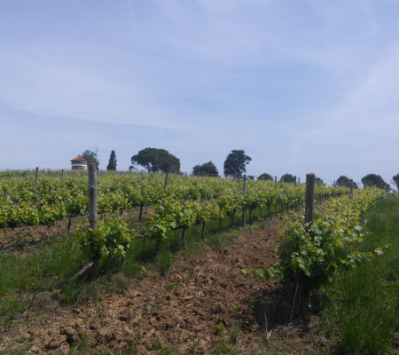 Blend-All-About-Wine-Quinta dos Plátanos-on route of the Classics-Vineyards 2