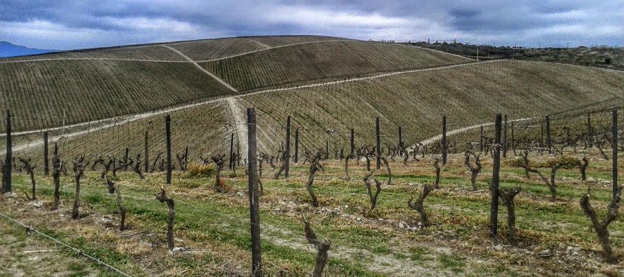 Blend-All-About-Wine-Quinta de Cidrô-Vineayard
