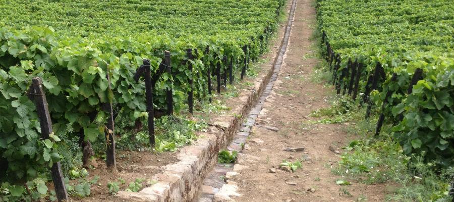 vinhas_quinta_dos_frades quinta dos frades QUINTA DOS FRADES, UM DOURO REQUINTADO vinhas quinta dos frades